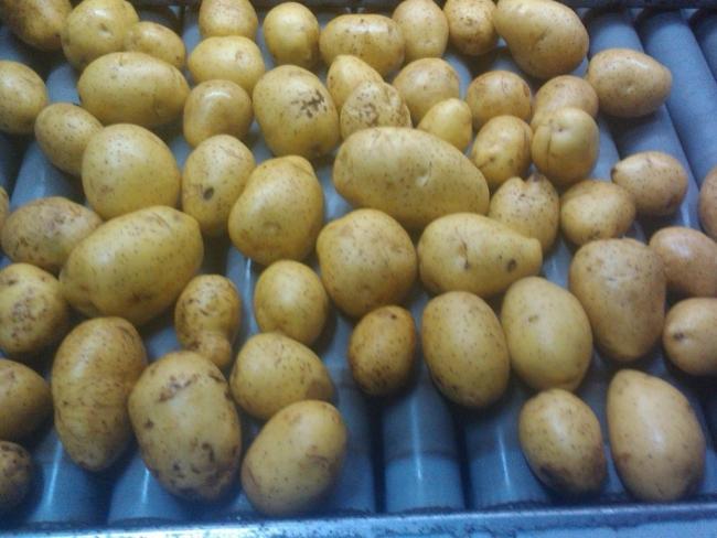 Эксперты назвали смертельную опасность мытого картофеля