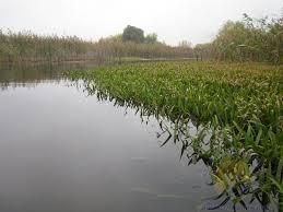Два озера в нашем регионе получили статус заказников общегосударственного значения
