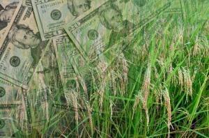 Украина - на последнем месте в Европе по уровню господдержки агросектора