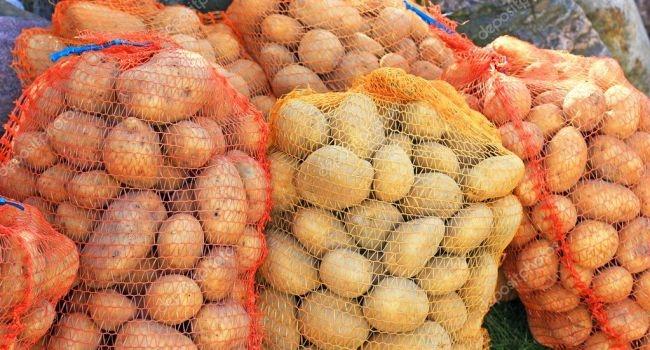 Килограмм картофеля будет стоить 40 гривен?