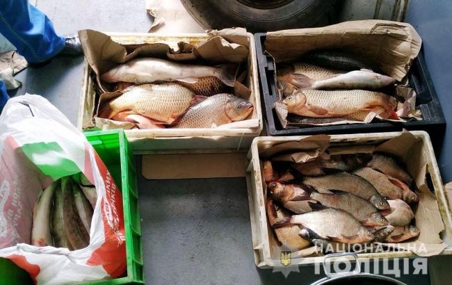 Правоохранители изъяли незаконно выловленную рыбу