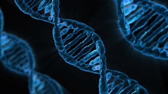 Учёные изобрели новый точный метод редактирования ДНК