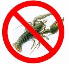 На Дунае запрещён вылов раков