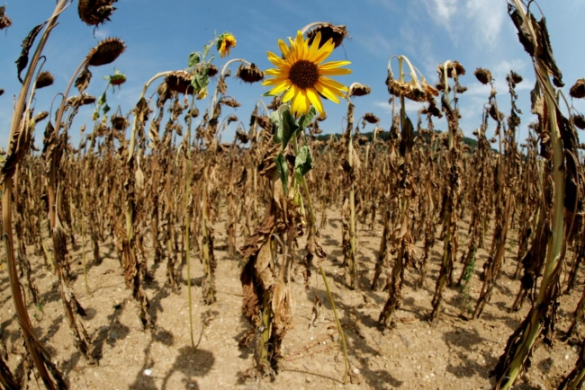 Нынешнее десятилетие может стать самым жарким за всю историю - ООН