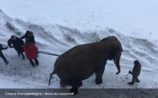Слон разгуливал посреди заснеженного Екатеринбурга