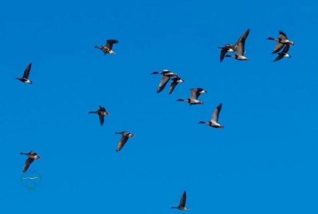 Из-за аномально тёплой зимы в Одесской области птицы начали вить гнезда, а рыба готовится к нересту