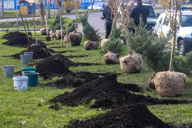 Активисты планируют масштабную акцию по высадке более миллиона деревьев по всей Украине