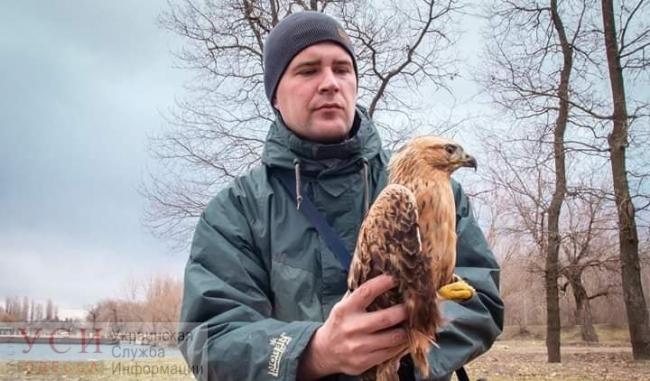 """Сотрудники нацпарка """"Тузловские лиманы"""" приручили маленького ястреба-канюка, спасённого от браконьеров"""