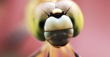 В мире уже полмиллиона видов насекомых находятся в стадии вымирания