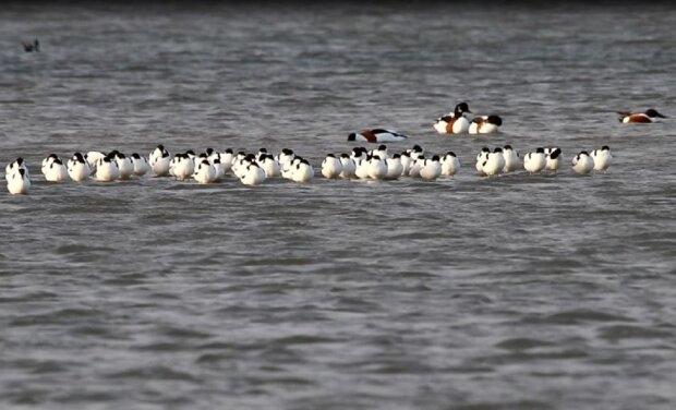 В Одесскую область прилетели краснокнижные птицы