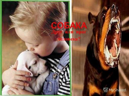 Собака друг или враг?