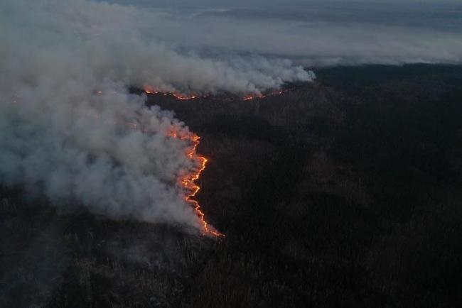 Ситуация с пожарами в Украине может быть спланированной диверсией - МВД
