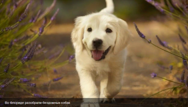 Во время пандемии из приюта Флориды забрали всех собак: видео, тронувшее сеть