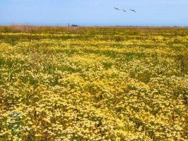 На участке НПП «Тузловские лиманы», недавно возвращенном заповеднику, восстанавливается степная экосистема