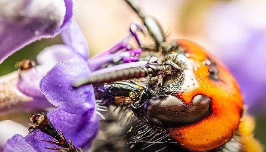 В США обеспокоены нашествием азиатских насекомых