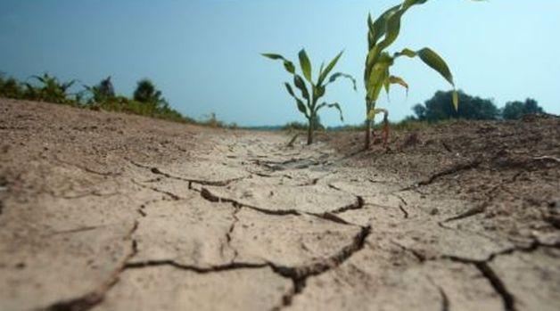 На суицид фермера в Килийском районе отреагировали в Министерстве экономразвития
