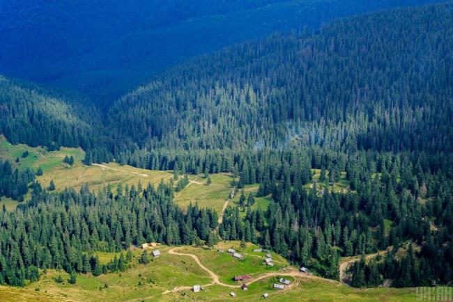 Украине необходима госполитика по адаптации лесов к изменению климата - эксперты WWF