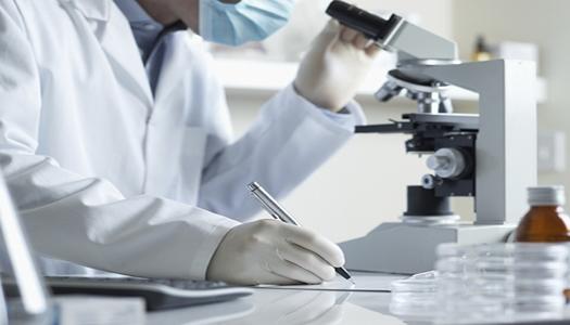 В Дании вырастили мозг человеческого эмбриона из стволовых клеток