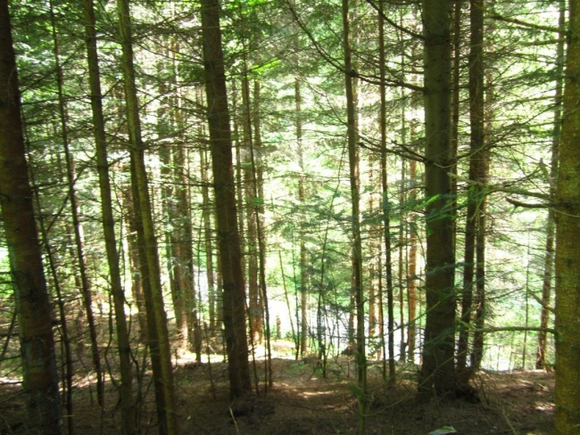 Рада приняла закон об инвентаризации лесов