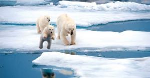 В Арктике впервые за 100 лет температура воздуха поднялась до +38 градусов