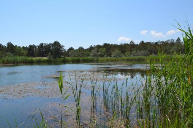 Как в сказке: на юге Одесской области сформировались лесные озера