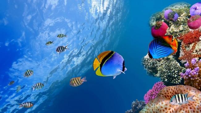Ученые прогнозируют исчезновение большинства видов рыб к 2048 году