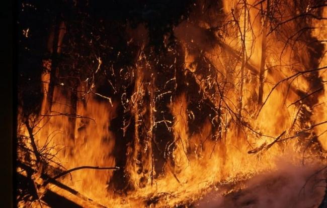 Названо число животных, погибших из-за пожаров в Австралии