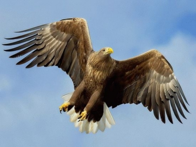 За взмахом древнего орла