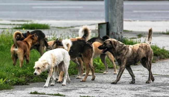 Наш лай хорош, начинай сначала, или Собаке - собачья смерть?