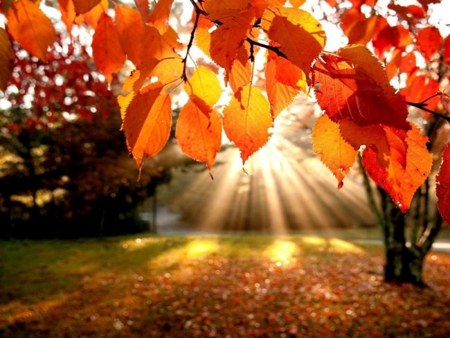 Сентябрь-2020 стал самым теплым в мире за всю историю наблюдений