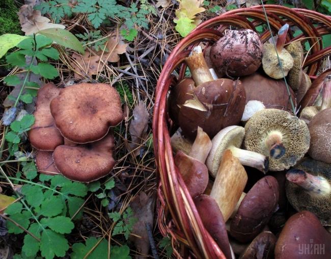 Сезон грибов: как не отравиться
