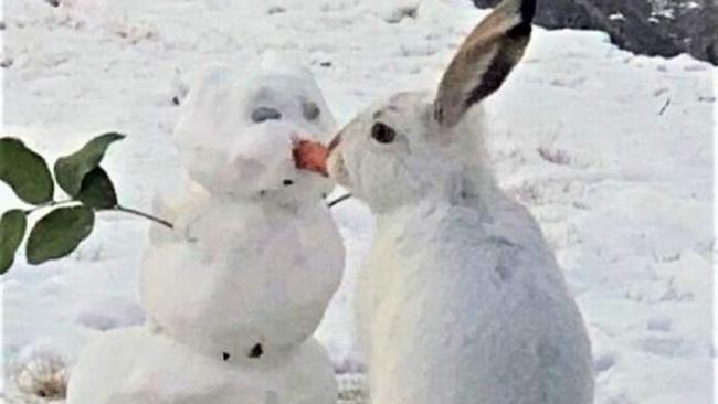 Заяц съел нос снеговика и покорил сеть: смешное видео, которое стало вирусным