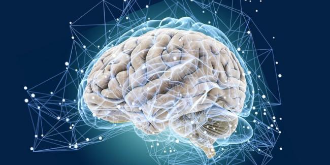 Ученые рассказали, как защитить мозг от возрастных изменений