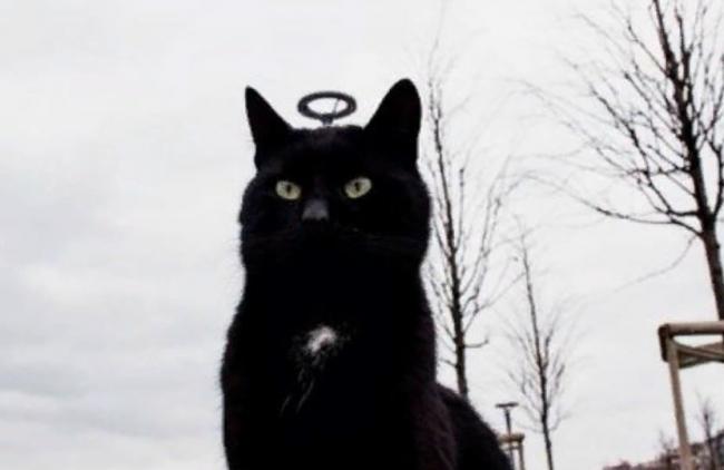 Удачный ракурс или все же святой кот: оптические иллюзии, которые удивляют