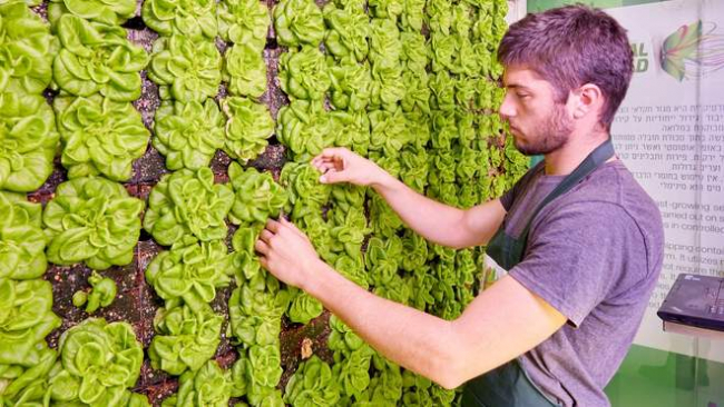 В украинских супермаркетах появятся вертикальные фермы
