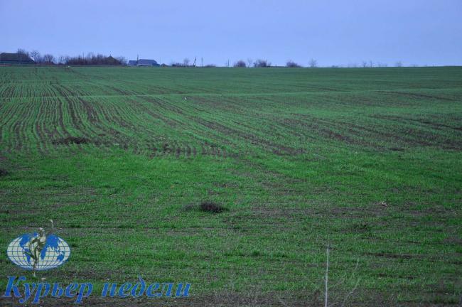 Что принесли бессарабской земле осенне-зимние осадки. Говорят фермеры и специалисты