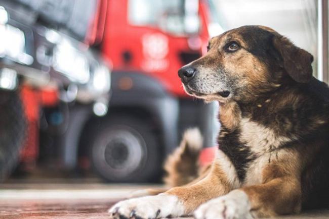 Хвостатый пожарный из Киева: история пса, который охраняет покой спасателей
