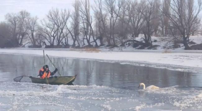 Одесские спасатели освободили лебедя из ледяного плена