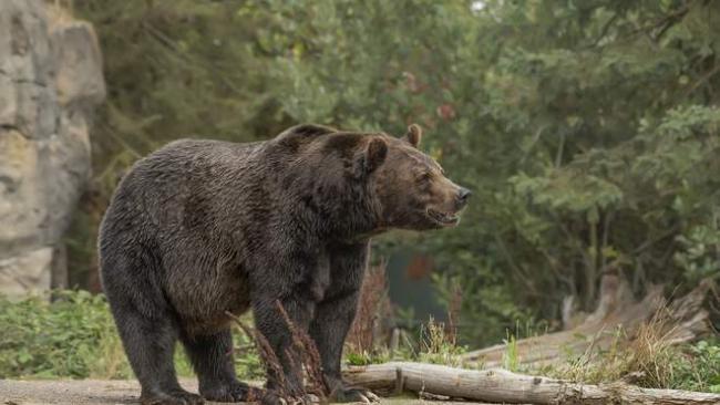 Неожиданный гость: в США медведь пришёл на домашнюю вечеринку к диджею