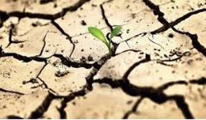 Неурожайность и пересыхание рек: экологи прогнозируют сильную засуху в Одесской области