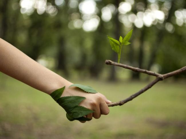 Простые советы, которые помогут сохранить леса