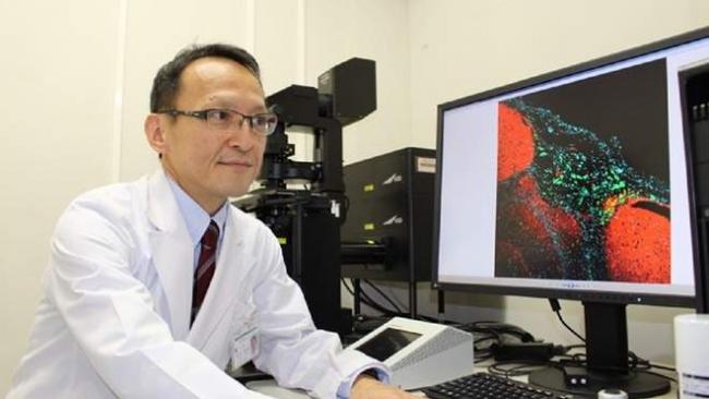 Японские учёные разработали гидрогель, который за сутки превращает раковые клетки в обычные стволовые