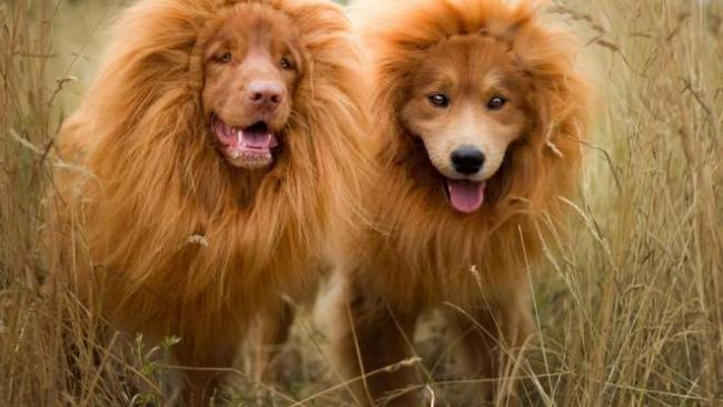 Курьезный обман: в китайском зоопарке вместо льва показывали собаку