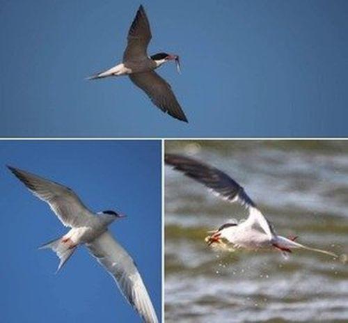 Удоды, кряквы: всё больше птиц возвращается на Тузловские лиманы