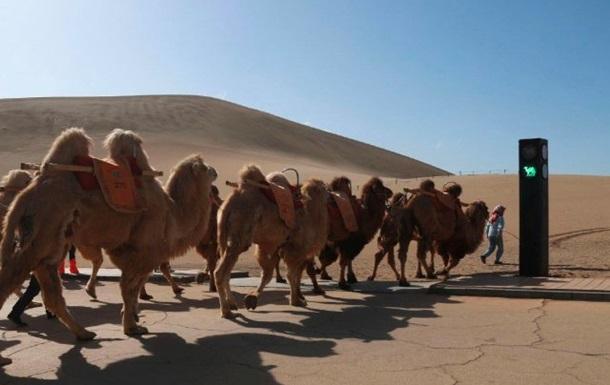 В Китае появился светофор для верблюдов