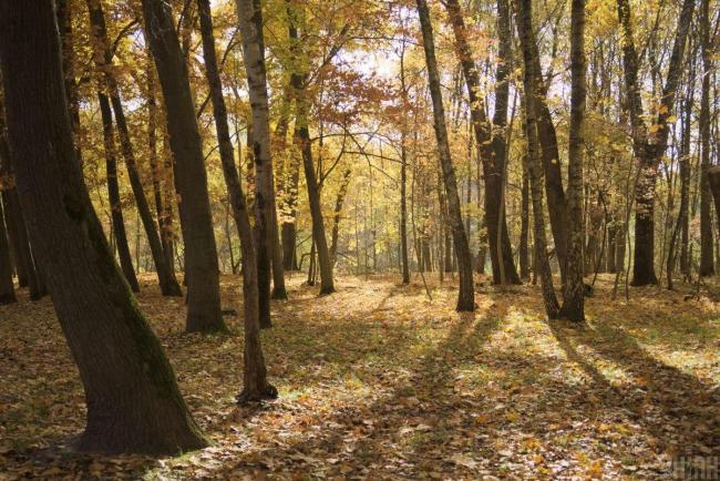 Парламент рассмотрит законопроект, защищающий самосейные леса от вырубки
