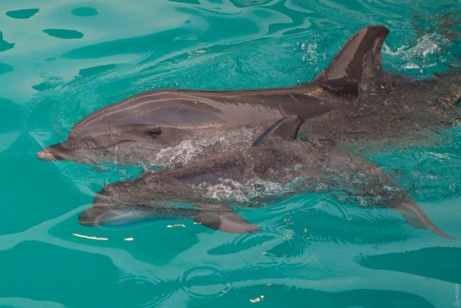 В одесском дельфинарии пополнение (фото)