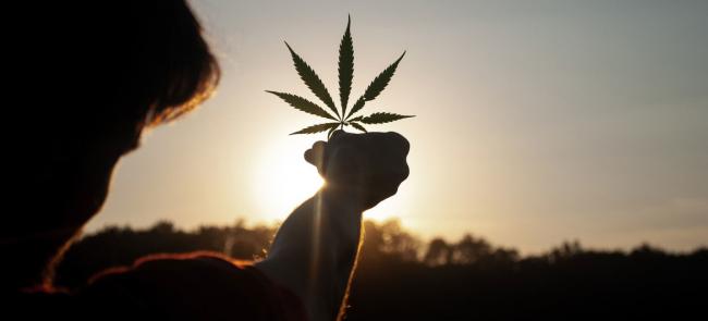 В Украине легализуют марихуану: кому и зачем это нужно