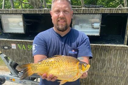 Американский рыболов поймал в реке огромную золотую рыбку