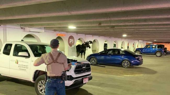 Отказывался идти ещё куда-то: почему лось в Колорадо регулярно заходил в гараж и лизал стены